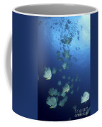 Large School Of Batfish, Christmas Coffee Mug