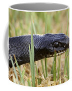 Large Whipsnake Coluber Jugularis Coffee Mug