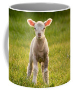 Larry Lamb And His Lovely Pink Ears. Coffee Mug