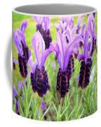 Lavenders Coffee Mug