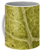 Leaf Vascularization Coffee Mug