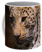 Leopard I Coffee Mug
