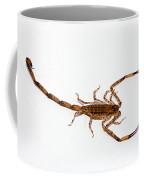 Lesser Brown Scorpion Coffee Mug