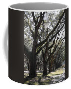 Light Through Live Oaks Coffee Mug
