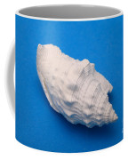 Lime Made From A Seashell Coffee Mug by Ted Kinsman