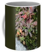 Lime Stonecrop  Leaves In Winter Coffee Mug