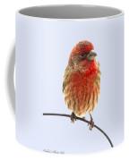 Little Beauty Male Finch I Coffee Mug