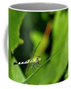 little Green wings Coffee Mug