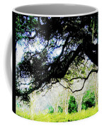Live Oak At Capitol Lakes Park Coffee Mug