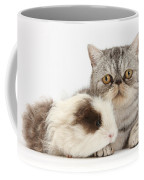 Long-haired Guinea Pig And Silver Tabby Coffee Mug