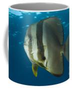 Longfin Spadefish, Papua New Guinea Coffee Mug by Steve Jones