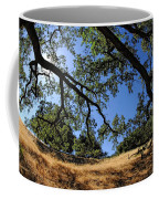 Looking Through The Oaks Coffee Mug