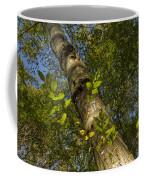 Looking Up At A Tree Trunk Coffee Mug