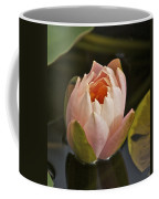 Lotus Opening 2804 Coffee Mug