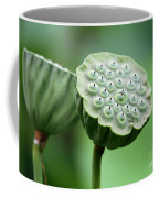 Lotus Seed Pods Coffee Mug