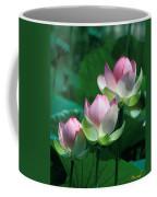 Lotus--stepping Stones 24p Coffee Mug
