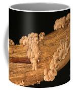 Luminescent Mushroom Panellus Stipticus Coffee Mug