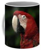 Macaw In Red Coffee Mug