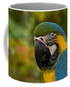 Macaw Parrot Stare Down Coffee Mug