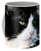 Maine Coon Face Coffee Mug