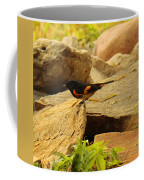 Male American Redstart On The Rocks Coffee Mug