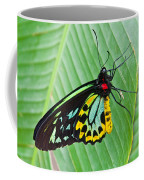 Male Cairns-birdwing Butterfly Coffee Mug