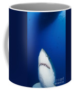 Male Great White Shark Showing Teeth Coffee Mug