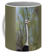 Male Ostrich Coffee Mug