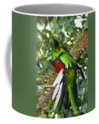 Male Resplendent Quetzal Coffee Mug
