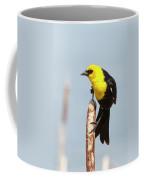 Male Yellow-headed Blackbird Coffee Mug