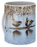Mallard Ducks Sitting On A Sandbar  Coffee Mug