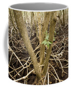 Mangrove Forest With Red Mangrove Coffee Mug by Tim Laman