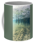 Mangrove Tree Roots Cast Shadows Coffee Mug