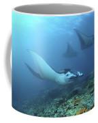 Manta Rays, Komodo, Indonesia Coffee Mug