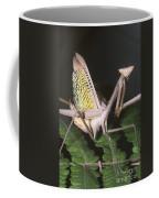 Mantid Defensive Display Coffee Mug