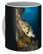 Map Pufferfish, Indonesia Coffee Mug
