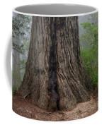 Massive Redwood And Fog Coffee Mug