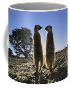 Meerkats Start Each Day With A Sunbath Coffee Mug