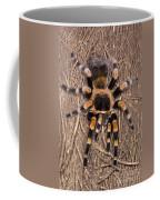 Mexican Red-legged Tarantula Coffee Mug