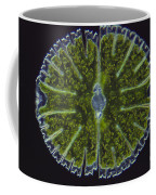Micrasterias Sp. Algae Lm Coffee Mug by M. I. Walker