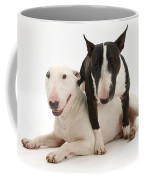 Miniature Bull Terrier Bitch, Lily Coffee Mug by Mark Taylor