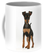 Miniature Pinscher Puppy Coffee Mug