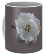 Moorpark Apricot Sq4420 Coffee Mug