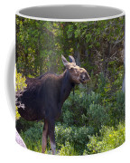 Moose Baxter State Park Maine 3 Coffee Mug