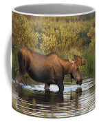 Moose Drinking In A Pond, Tombstone Coffee Mug
