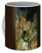 Moray Eel, Belize Coffee Mug