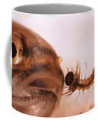 Mosquito Fish Preparing To Ingest Coffee Mug
