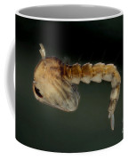 Mosquito Pupa Coffee Mug