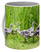 Mother Goose Leading Goslings Coffee Mug by Simon Bratt Photography LRPS