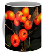 Mountain Ash Berries Coffee Mug